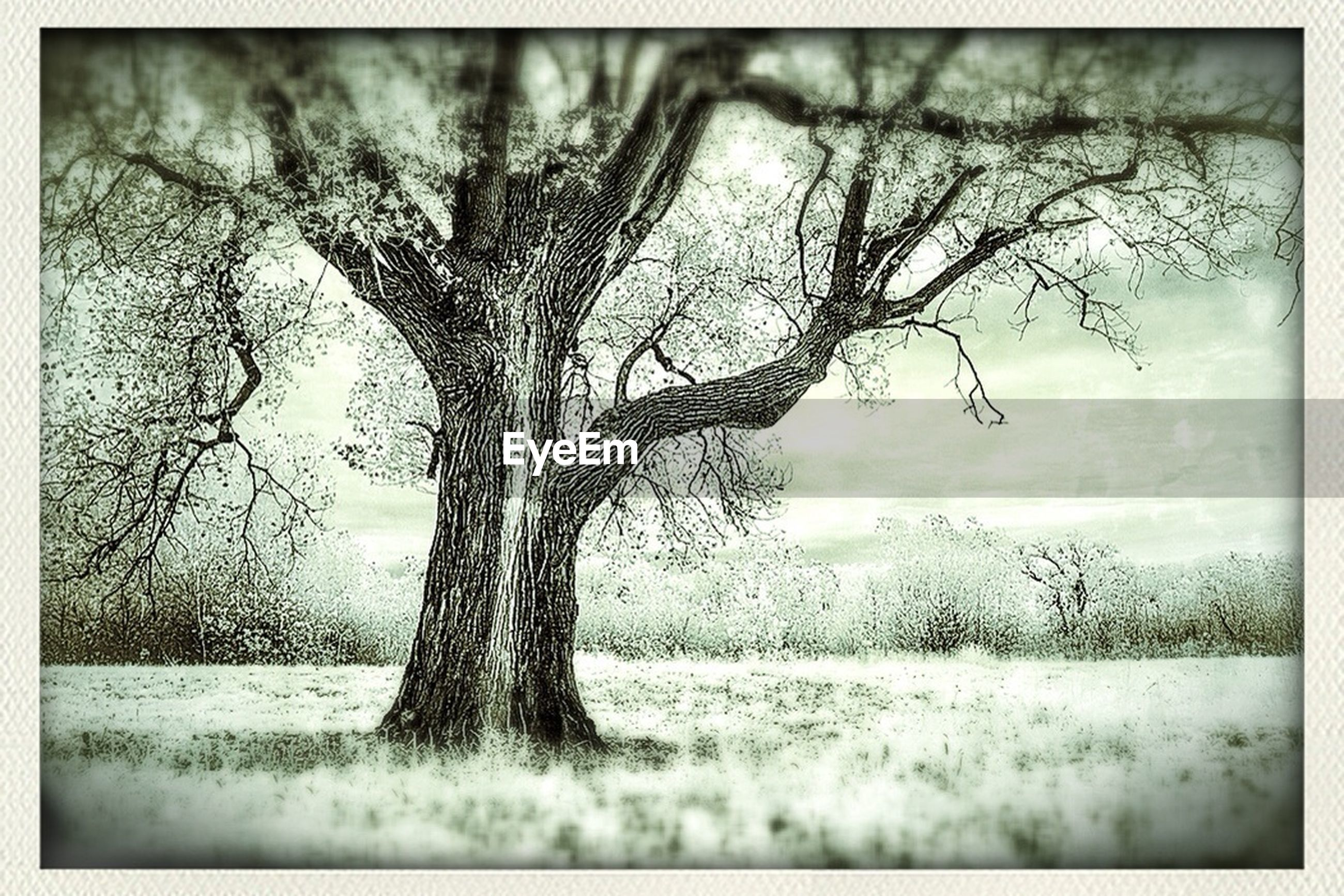 bare tree, transfer print, tree, auto post production filter, tree trunk, branch, tranquility, field, tranquil scene, nature, beauty in nature, grass, landscape, scenics, water, growth, day, single tree, sky, outdoors