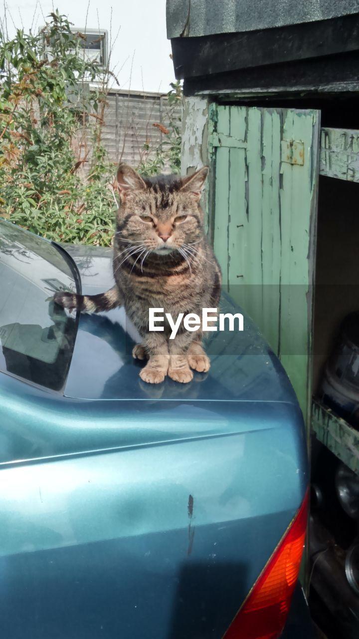 Portrait of cat on car