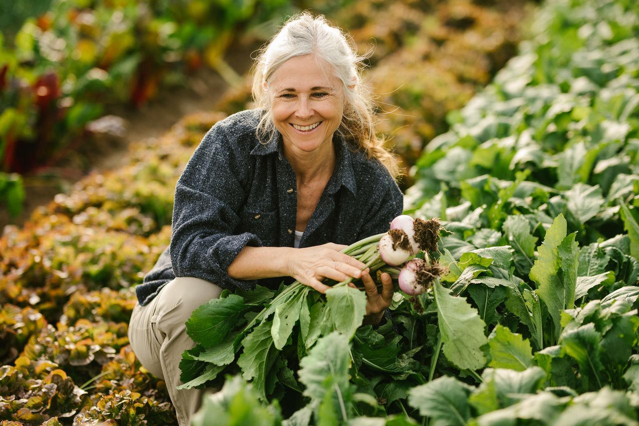 Smiling woman harvesting vegetable in farm