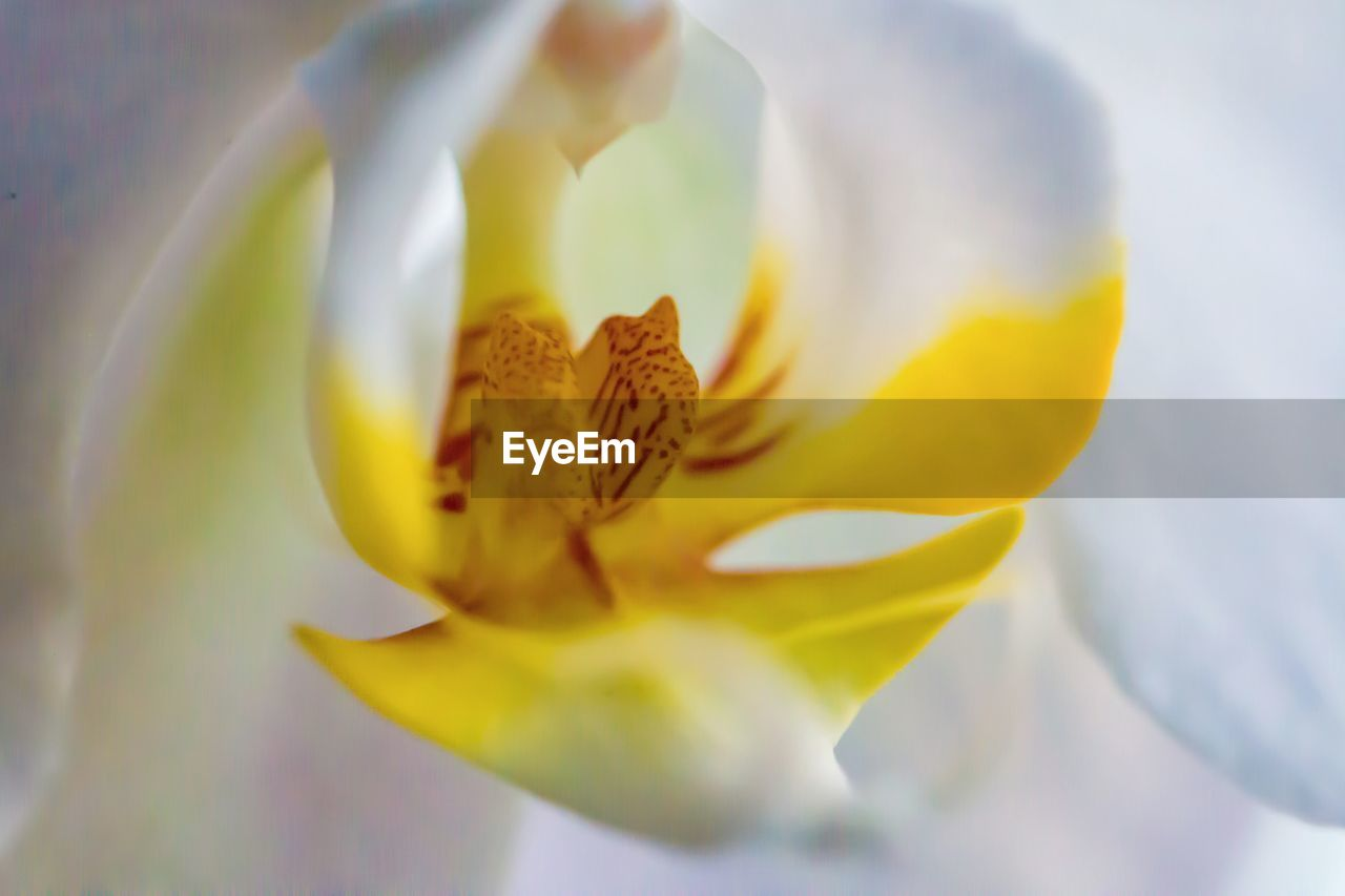 flower, petal, fragility, beauty in nature, flower head, nature, freshness, growth, selective focus, yellow, close-up, stamen, blooming, no people, plant, outdoors, day