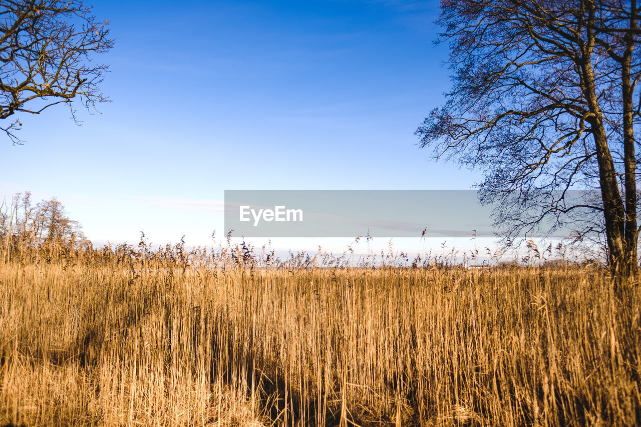 Scenic View Of Field Against Clear Blue Sky