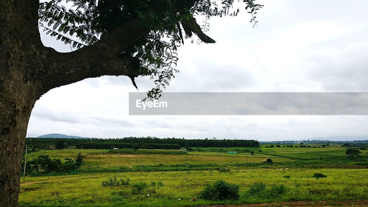 tree, landscape, field, tranquil scene, nature, beauty in nature, scenics, tranquility, growth, agriculture, green color, sky, no people, outdoors, day, rural scene, branch