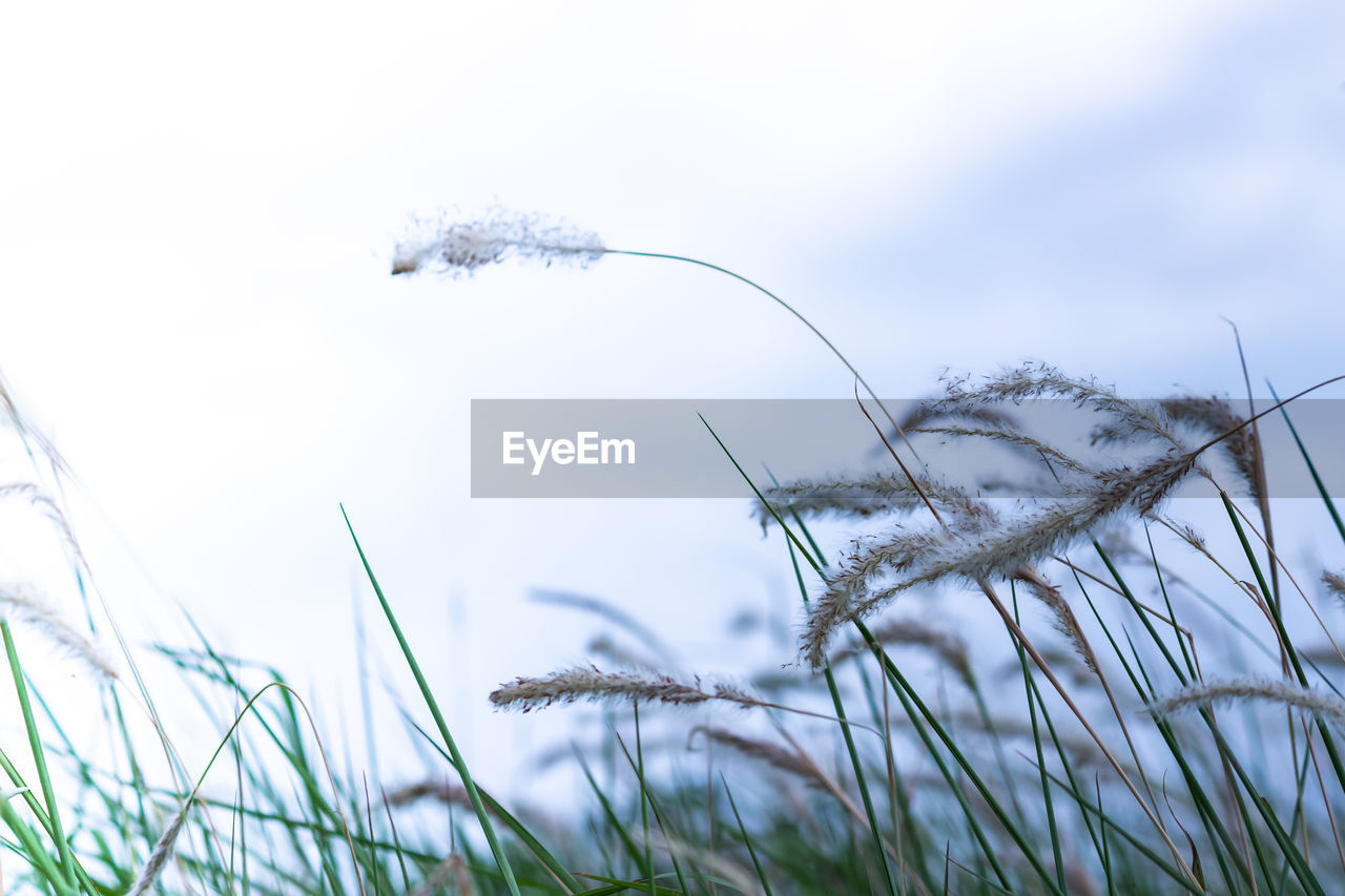 plant, growth, grass, nature, selective focus, close-up, day, cold temperature, no people, land, beauty in nature, tranquility, sky, winter, field, frozen, snow, focus on foreground, outdoors, ice, blade of grass