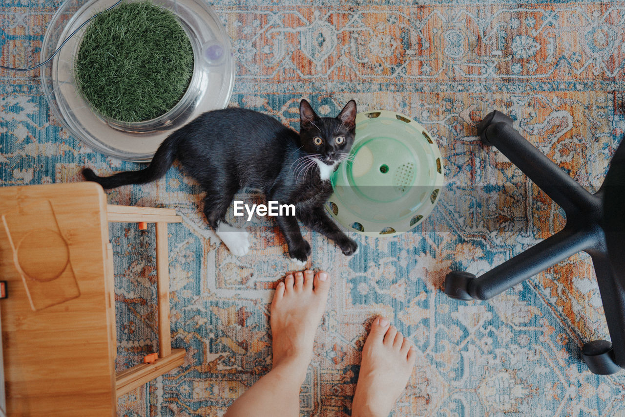 DIRECTLY ABOVE SHOT OF CAT ON FLOOR