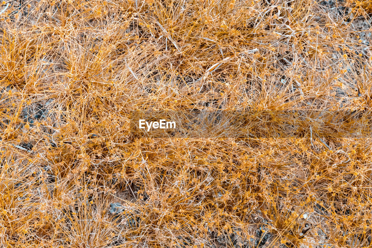 backgrounds, full frame, no people, nature, day, brown, plant, pattern, outdoors, grass, textured, growth, beauty in nature, yellow, dry, tranquility, autumn, land, close-up, high angle view