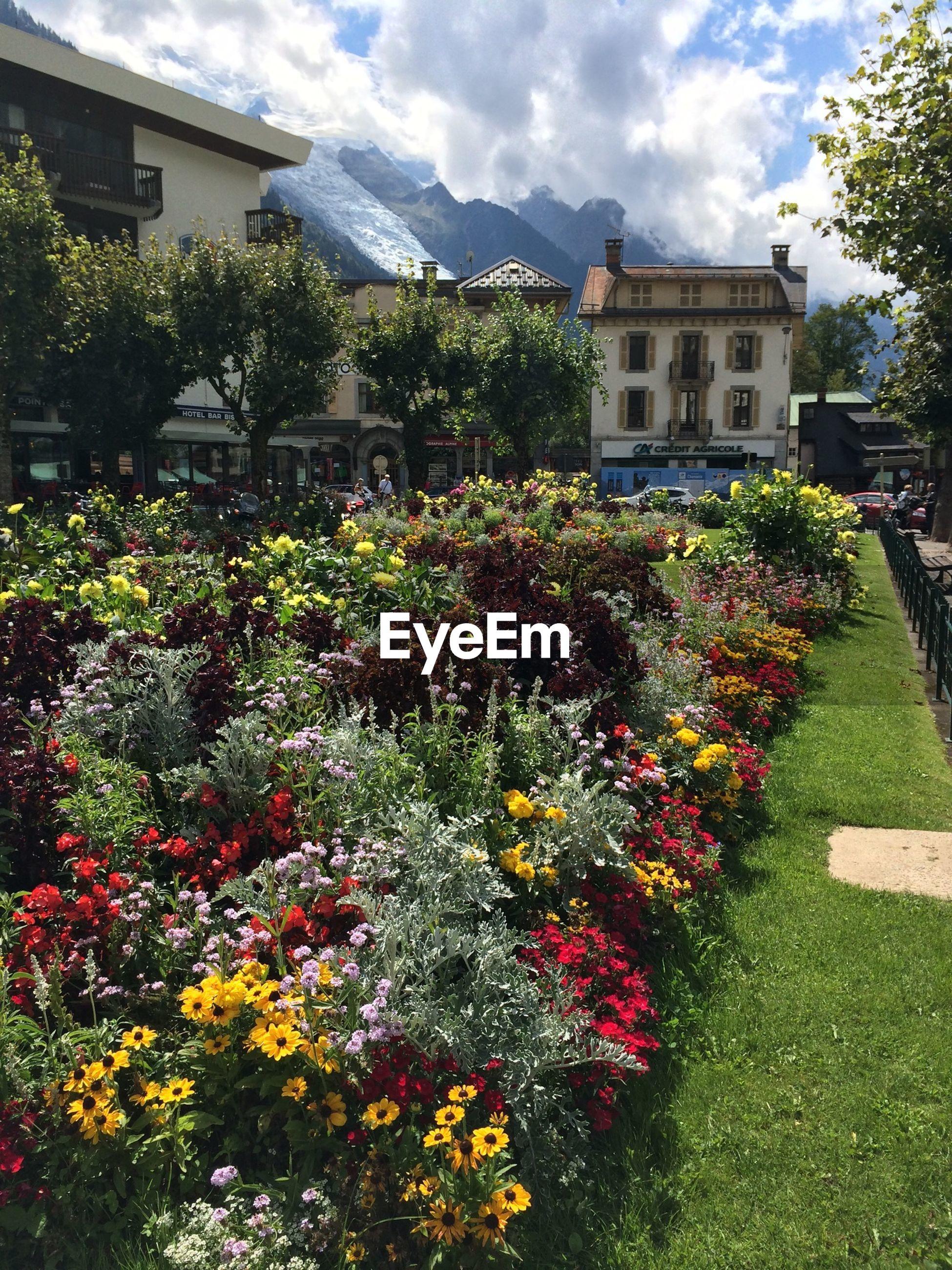 Flowers blooming in lawn