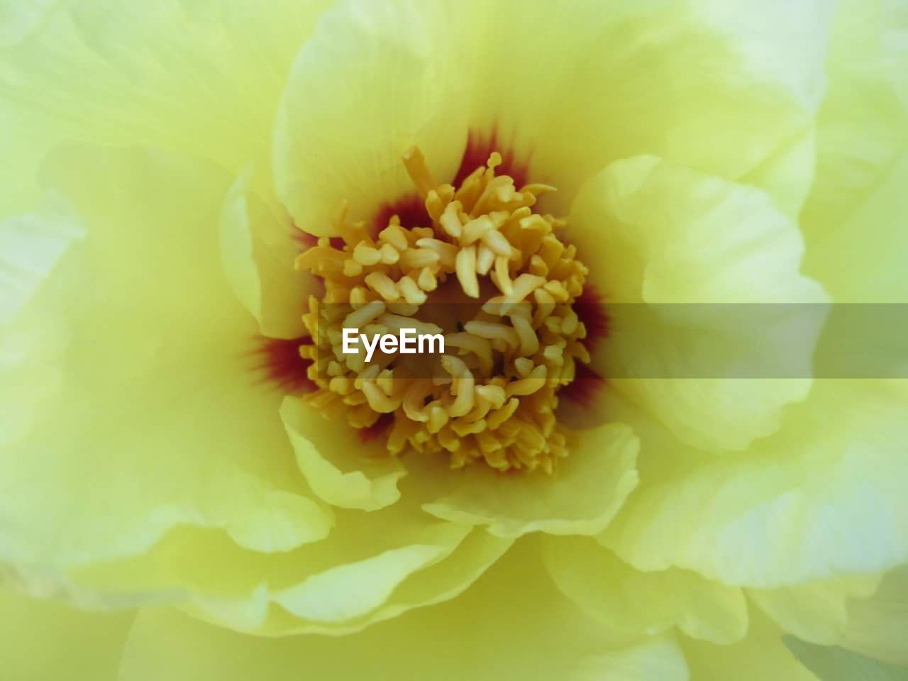 flower, petal, beauty in nature, freshness, fragility, flower head, nature, yellow, backgrounds, growth, full frame, close-up, no people, blooming, day, outdoors