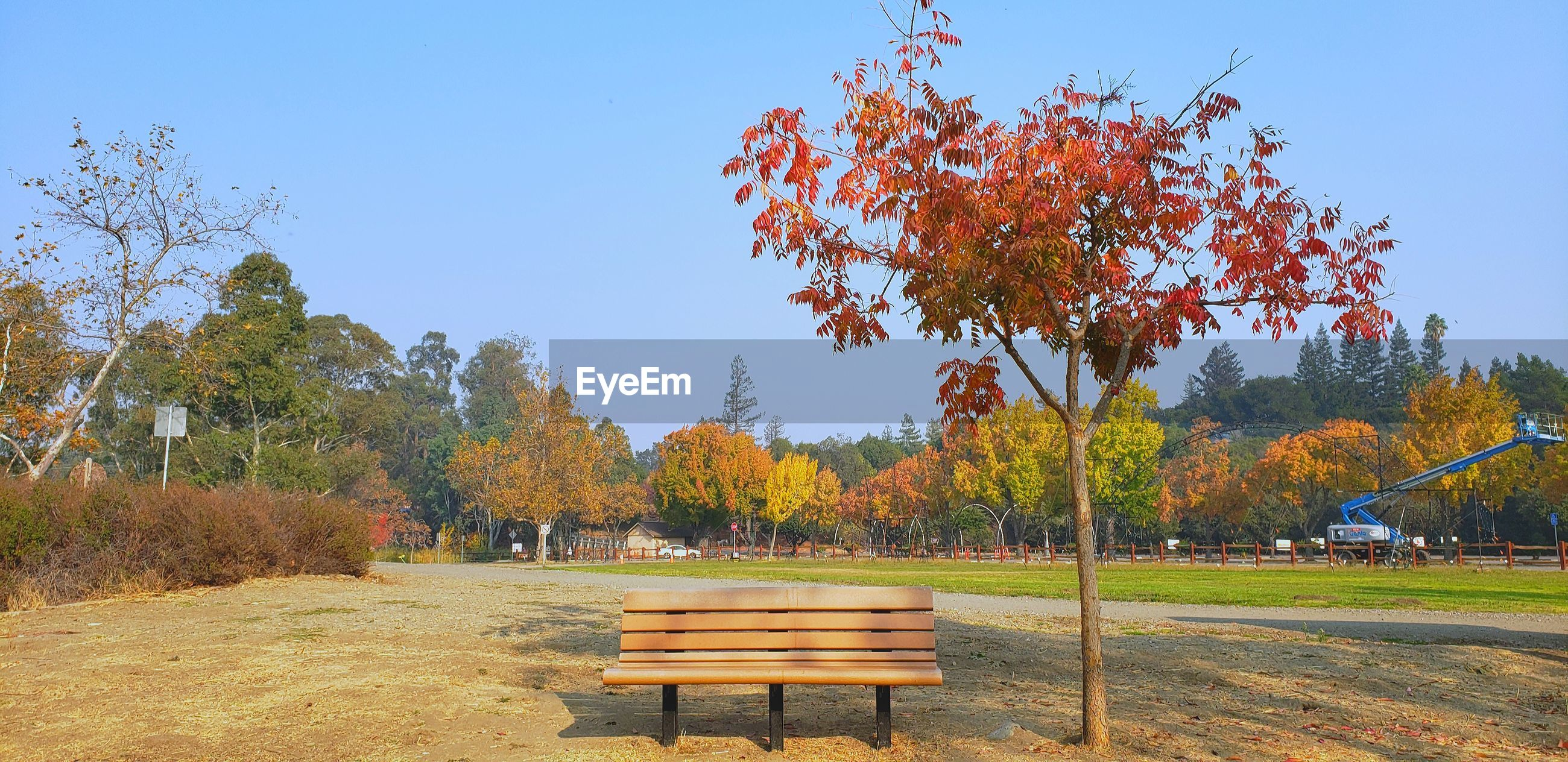 PARK BENCH BY TREES ON FIELD AGAINST CLEAR SKY