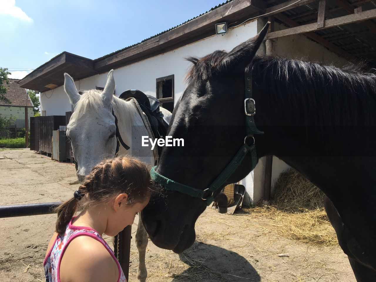 Girl Embracing Horse In Stable