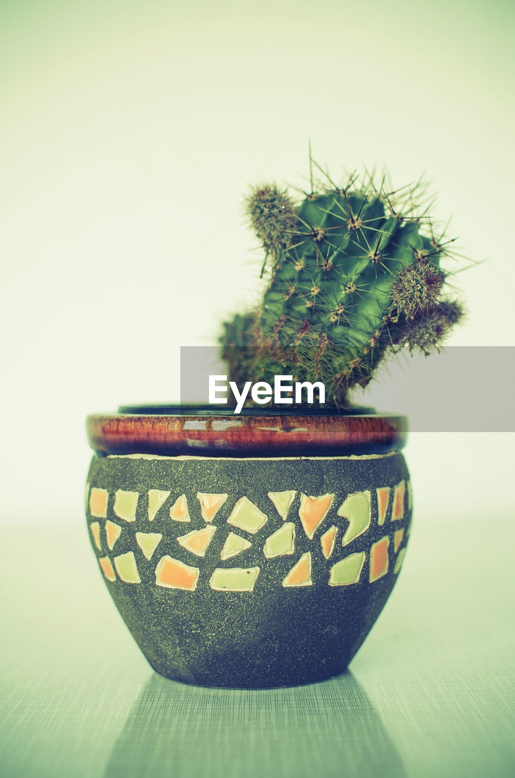 Close-up of cactus in houseplant