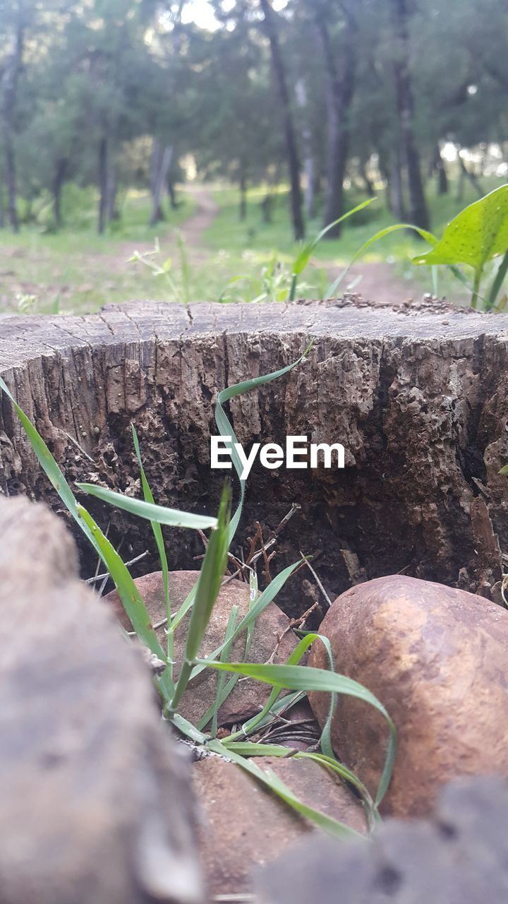 plant, selective focus, growth, day, nature, land, no people, close-up, vegetable, field, tree, food, food and drink, outdoors, focus on foreground, green color, wood - material, grass, healthy eating, freshness, surface level