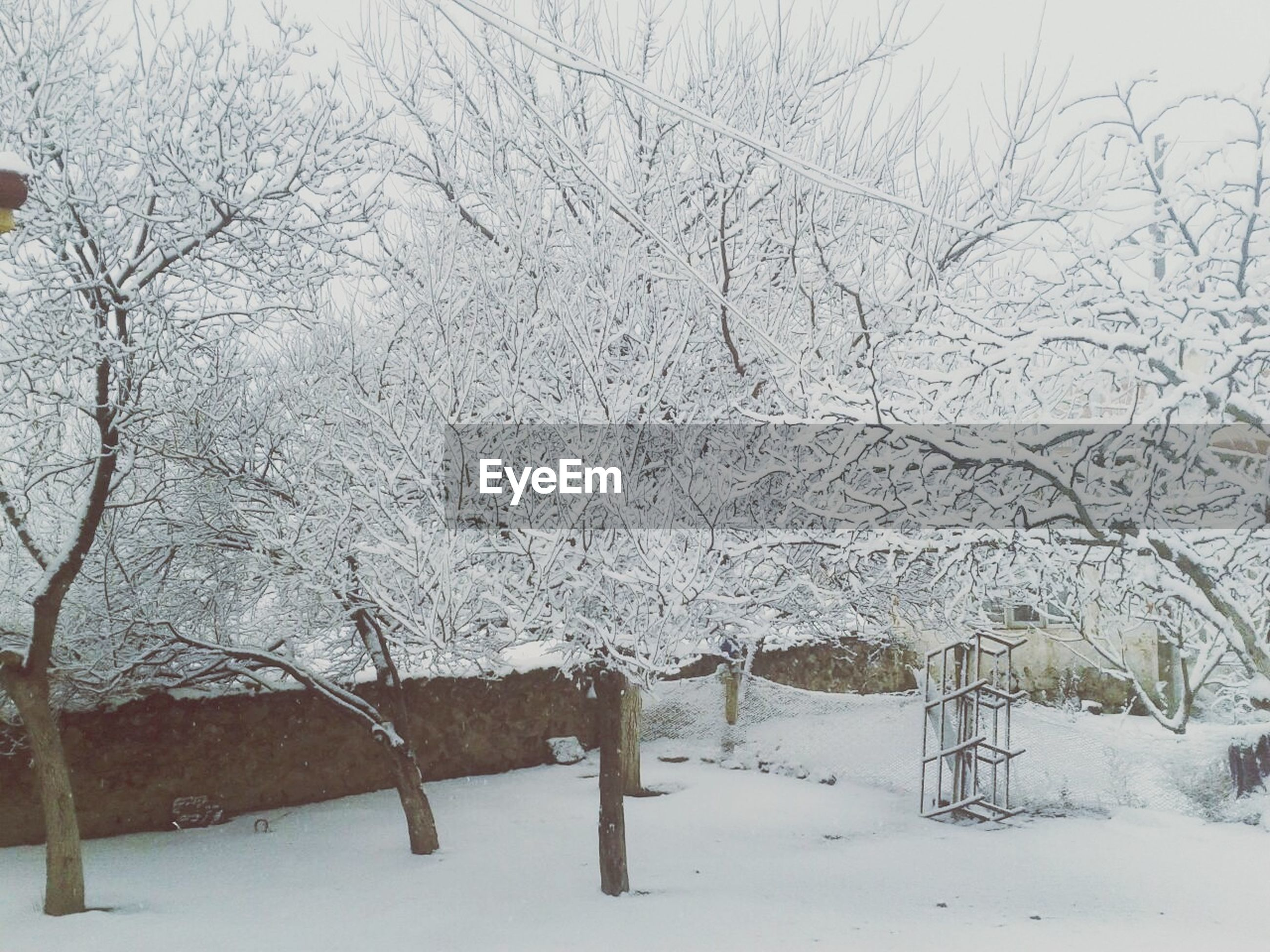snow, winter, cold temperature, season, weather, covering, bare tree, tree, frozen, white color, nature, tranquility, branch, covered, tranquil scene, beauty in nature, landscape, snow covered, field, cold