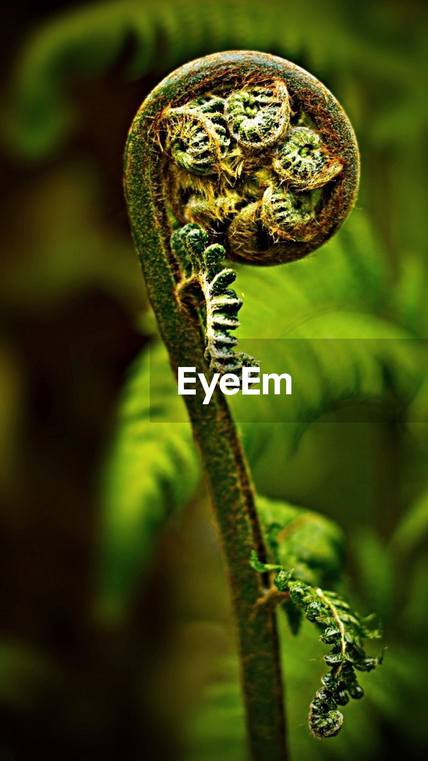 animal themes, animals in the wild, one animal, wildlife, focus on foreground, close-up, insect, green color, animal markings, plant, nature, selective focus, outdoors, no people, beauty in nature, day, natural pattern, animal wing, butterfly - insect, growth