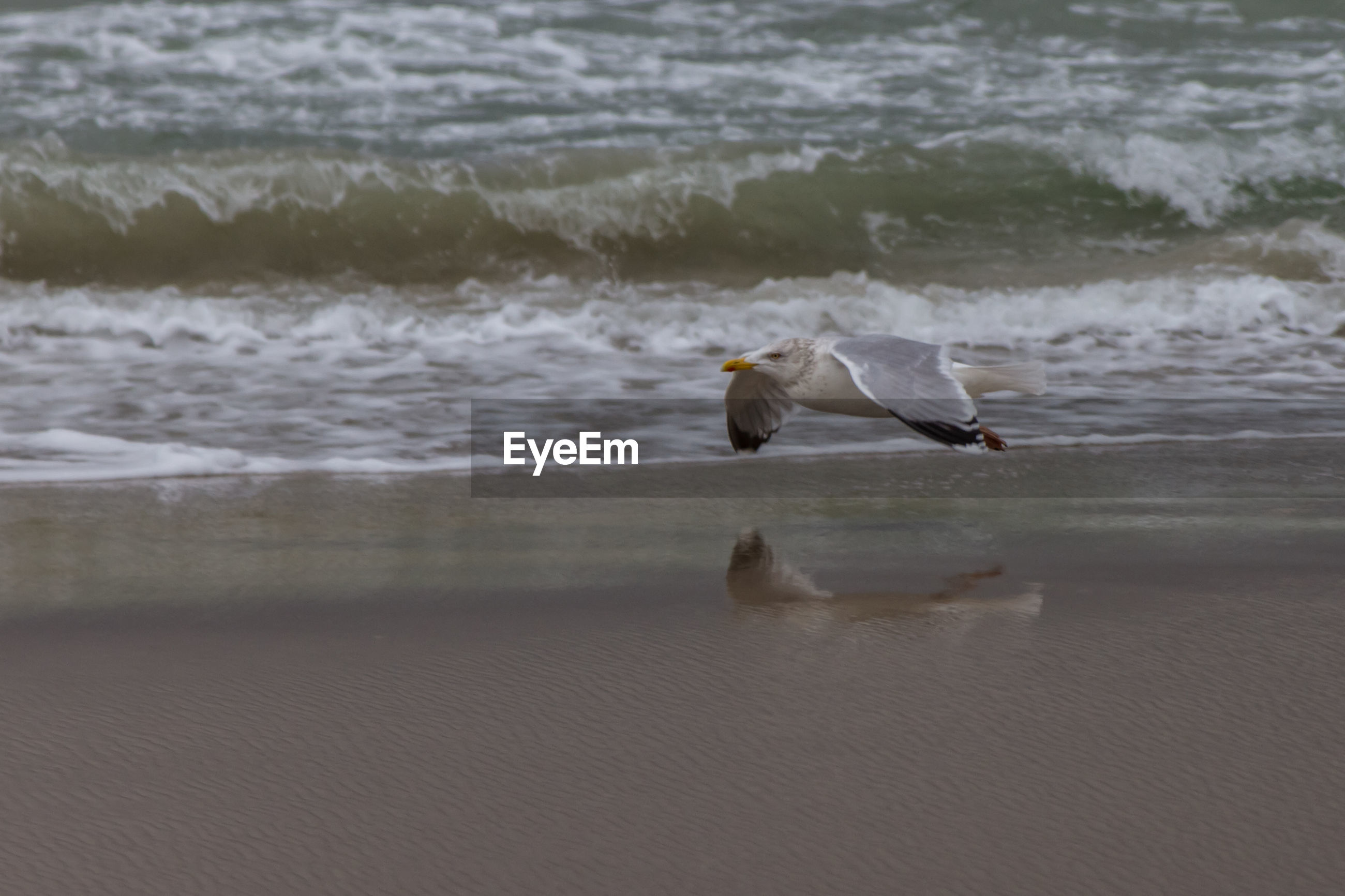 Side view of seagull flying over sea shore