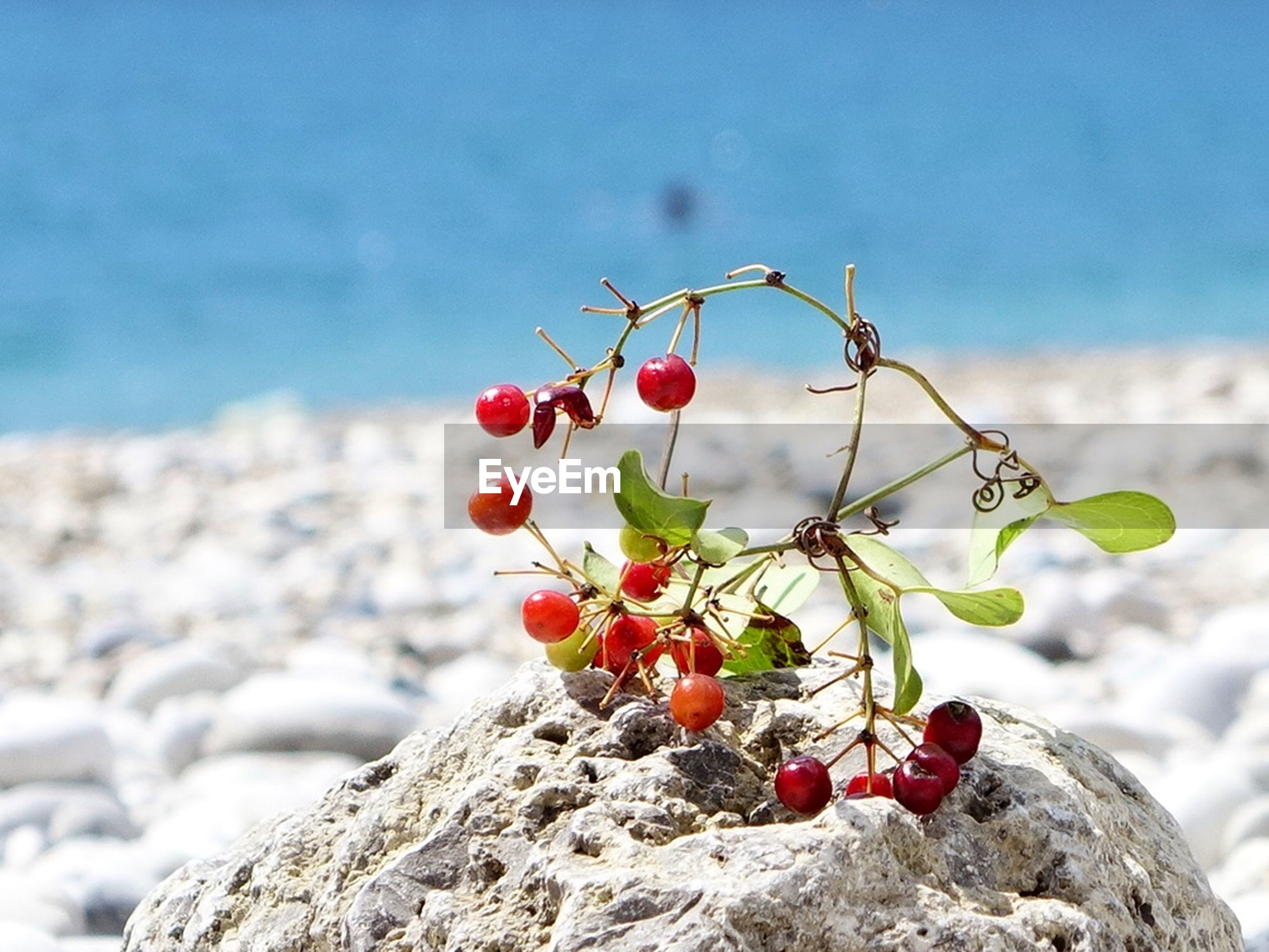 flower, freshness, growth, focus on foreground, nature, beauty in nature, close-up, red, plant, fragility, branch, sky, bud, rock - object, stem, growing, tranquility, botany, day, outdoors