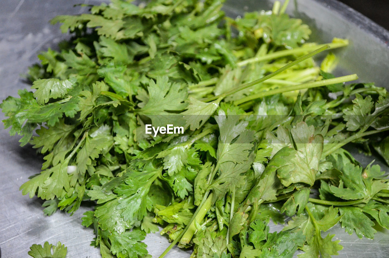 food and drink, food, healthy eating, wellbeing, freshness, green color, vegetable, close-up, indoors, still life, no people, plant part, leaf, raw food, high angle view, salad, herb, organic, green, selective focus, leaves, chopped, vegetarian food, arugula, coriander