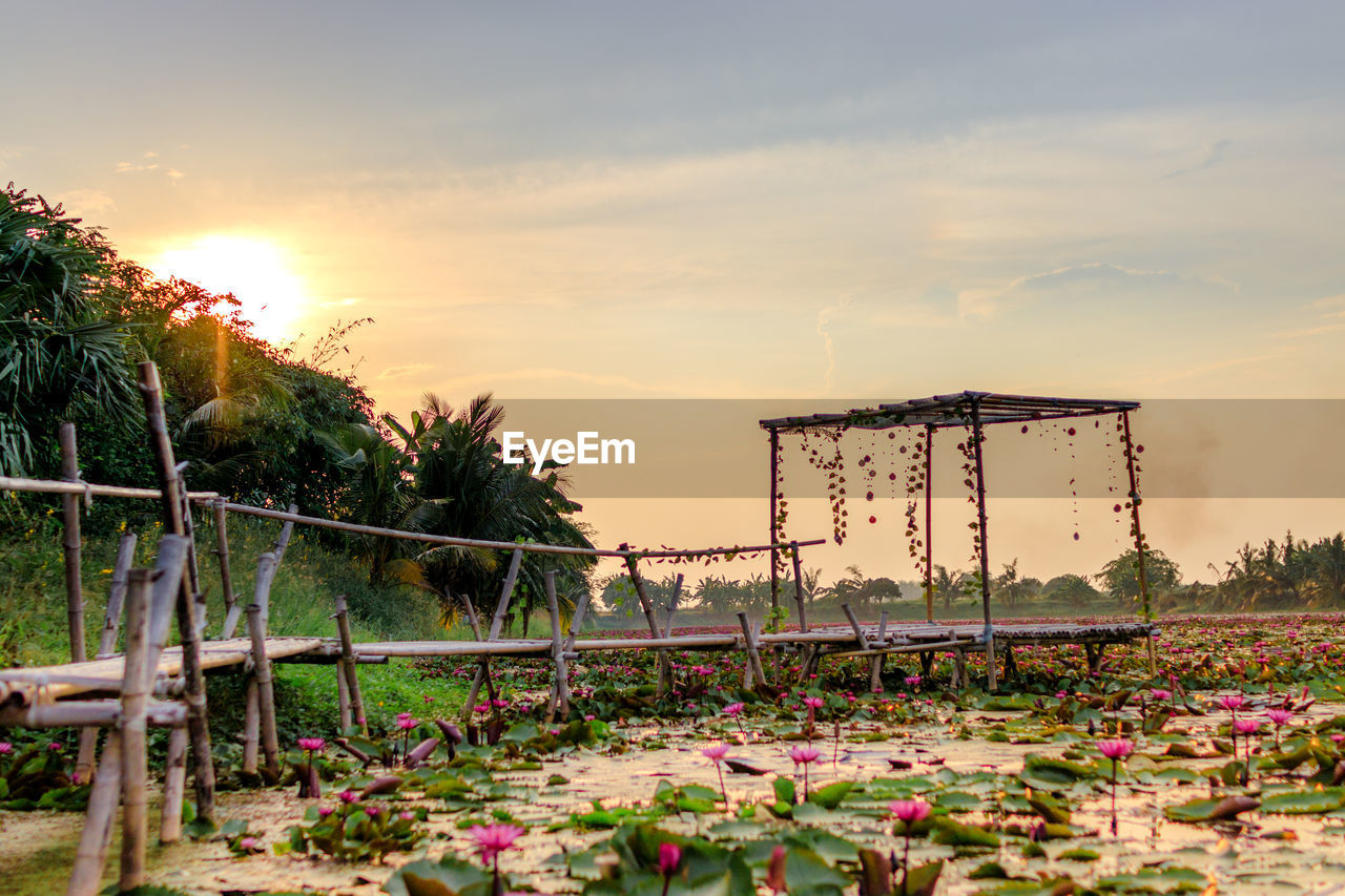 sky, sunset, plant, nature, beauty in nature, flower, cloud - sky, flowering plant, tree, growth, no people, built structure, land, outdoors, scenics - nature, architecture, orange color, tranquility, tranquil scene, field