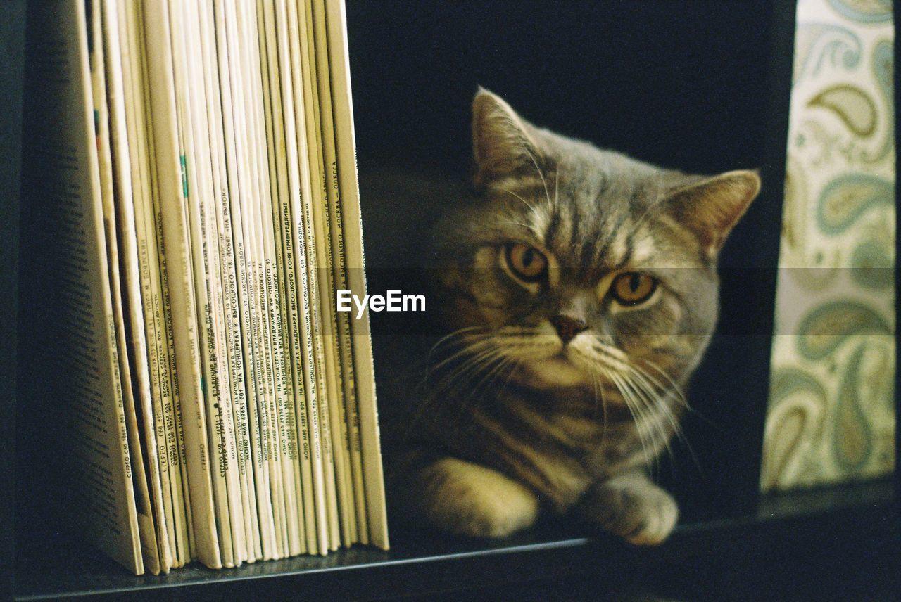 Portrait Of Cat In Bookshelf