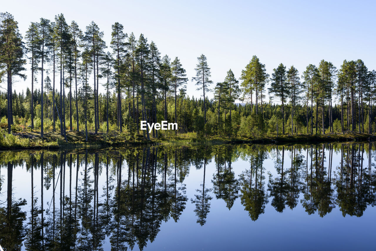 REFLECTION OF TREES IN LAKE AGAINST SKY IN FOREST