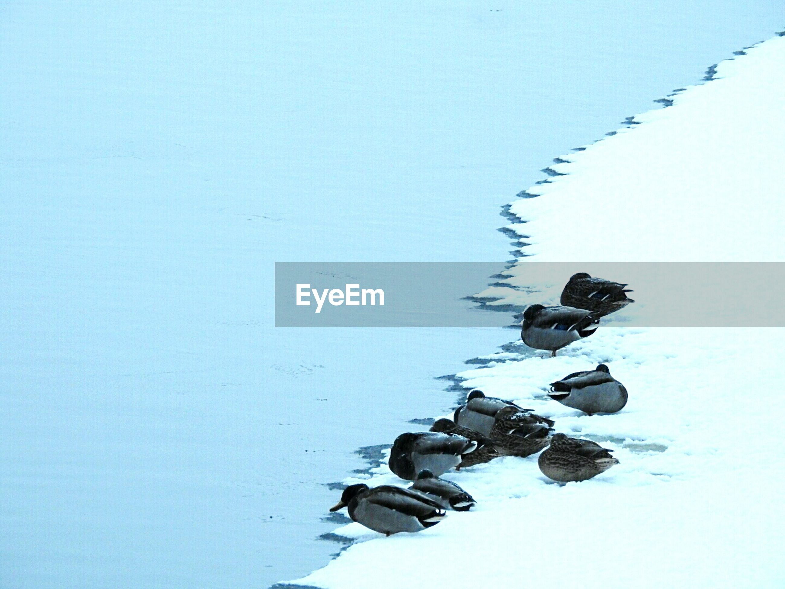Birds at water's edge in the snow