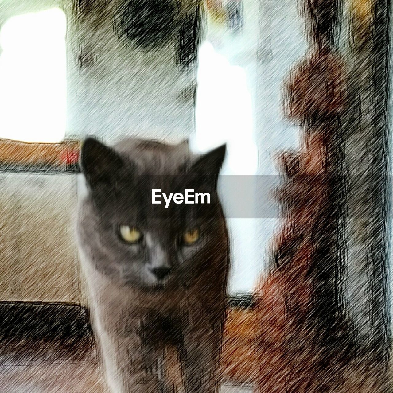 domestic cat, pets, domestic animals, feline, one animal, animal themes, mammal, portrait, looking at camera, whisker, indoors, no people, day, close-up, yellow eyes, nature