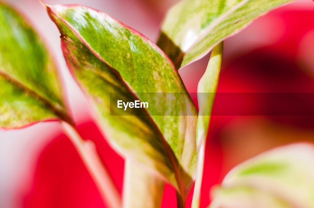 growth, plant, green color, close-up, leaf, nature, no people, beauty in nature, freshness, outdoors, day, fragility, flower head