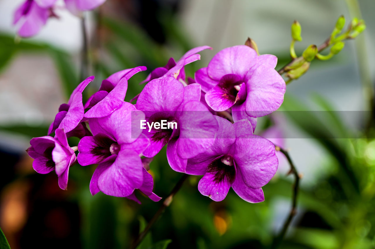 flower, flowering plant, vulnerability, fragility, plant, freshness, petal, beauty in nature, flower head, inflorescence, growth, close-up, focus on foreground, nature, purple, pink color, no people, day, selective focus, outdoors, pollen