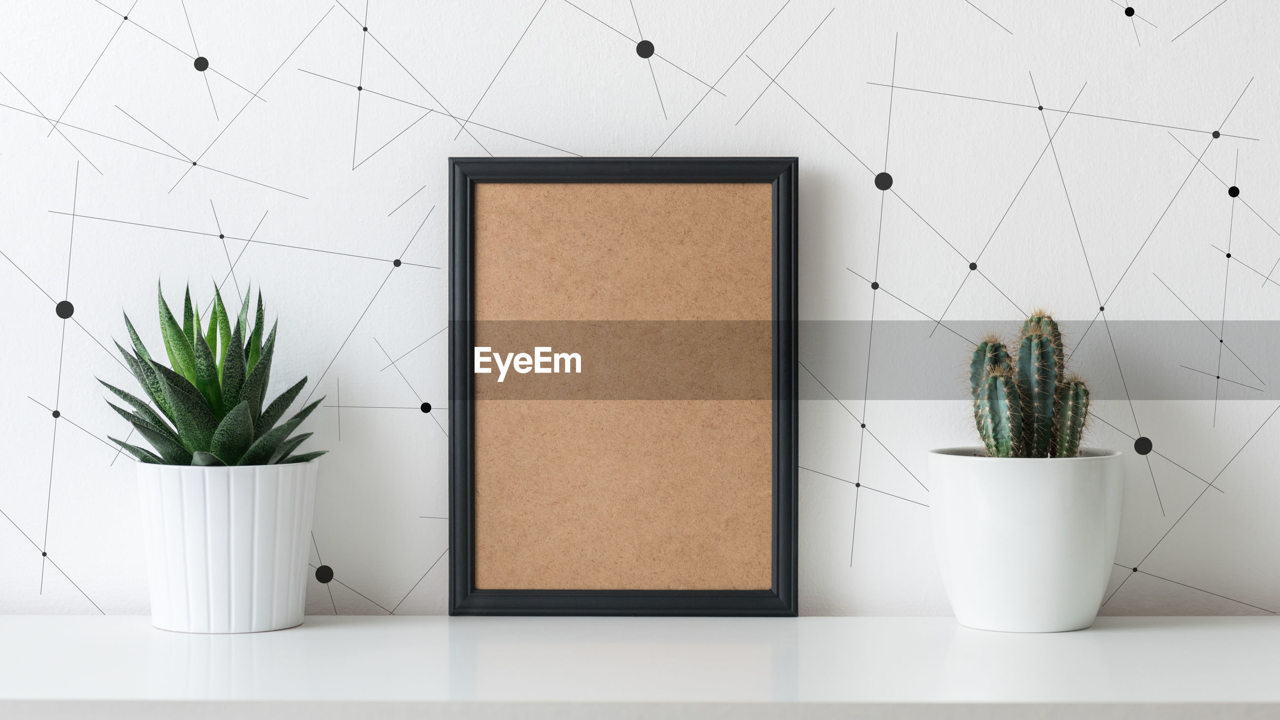 Potted plant and picture frame against wall