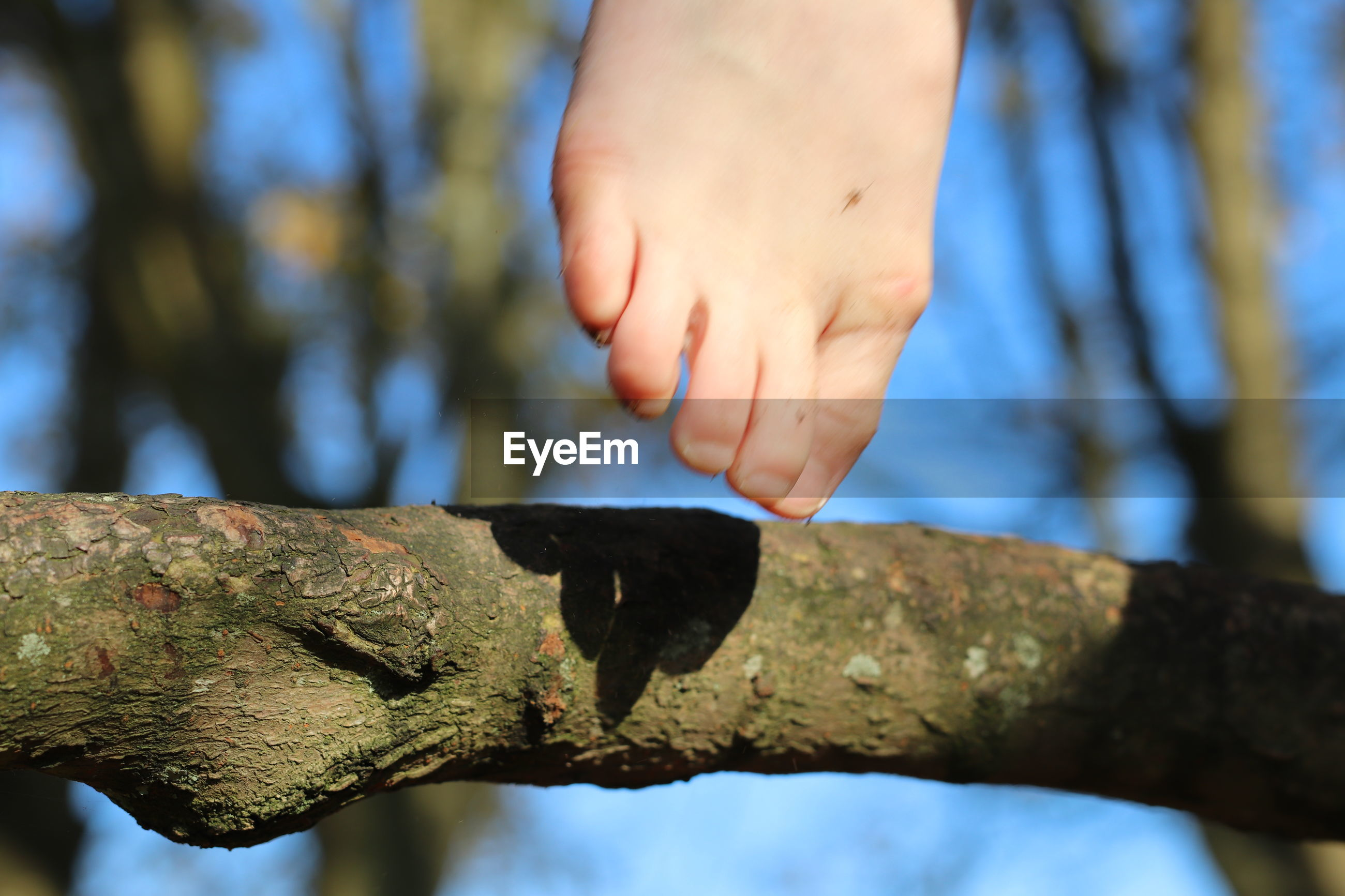 CLOSE-UP OF PERSON HAND ON TREE