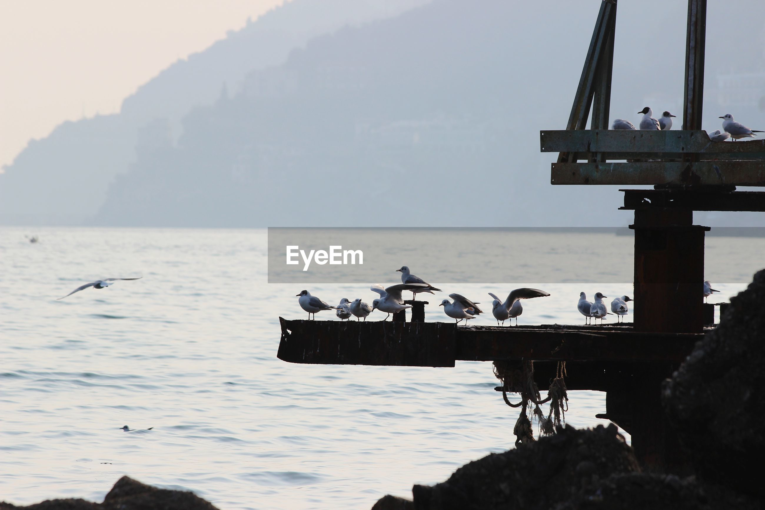 VIEW OF BIRDS PERCHING ON SEA