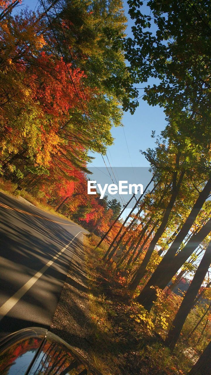 autumn, tree, change, nature, leaf, day, no people, the way forward, tranquil scene, tranquility, outdoors, beauty in nature, road, scenics, growth, sky, landscape