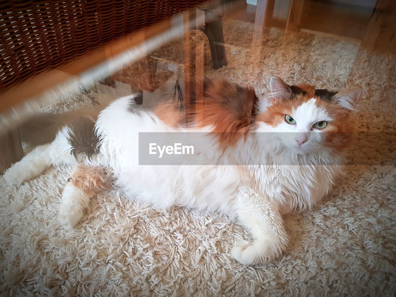 pets, domestic animals, domestic cat, animal themes, mammal, one animal, feline, high angle view, indoors, home interior, no people, lying down, relaxation, portrait, day, close-up