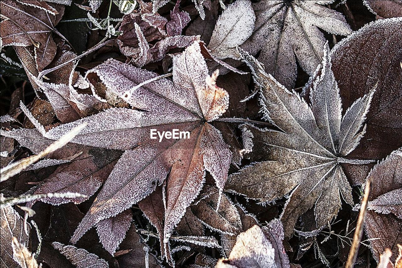 leaf, autumn, nature, winter, change, fragility, day, close-up, outdoors, no people, plant, frozen, beauty in nature, cold temperature