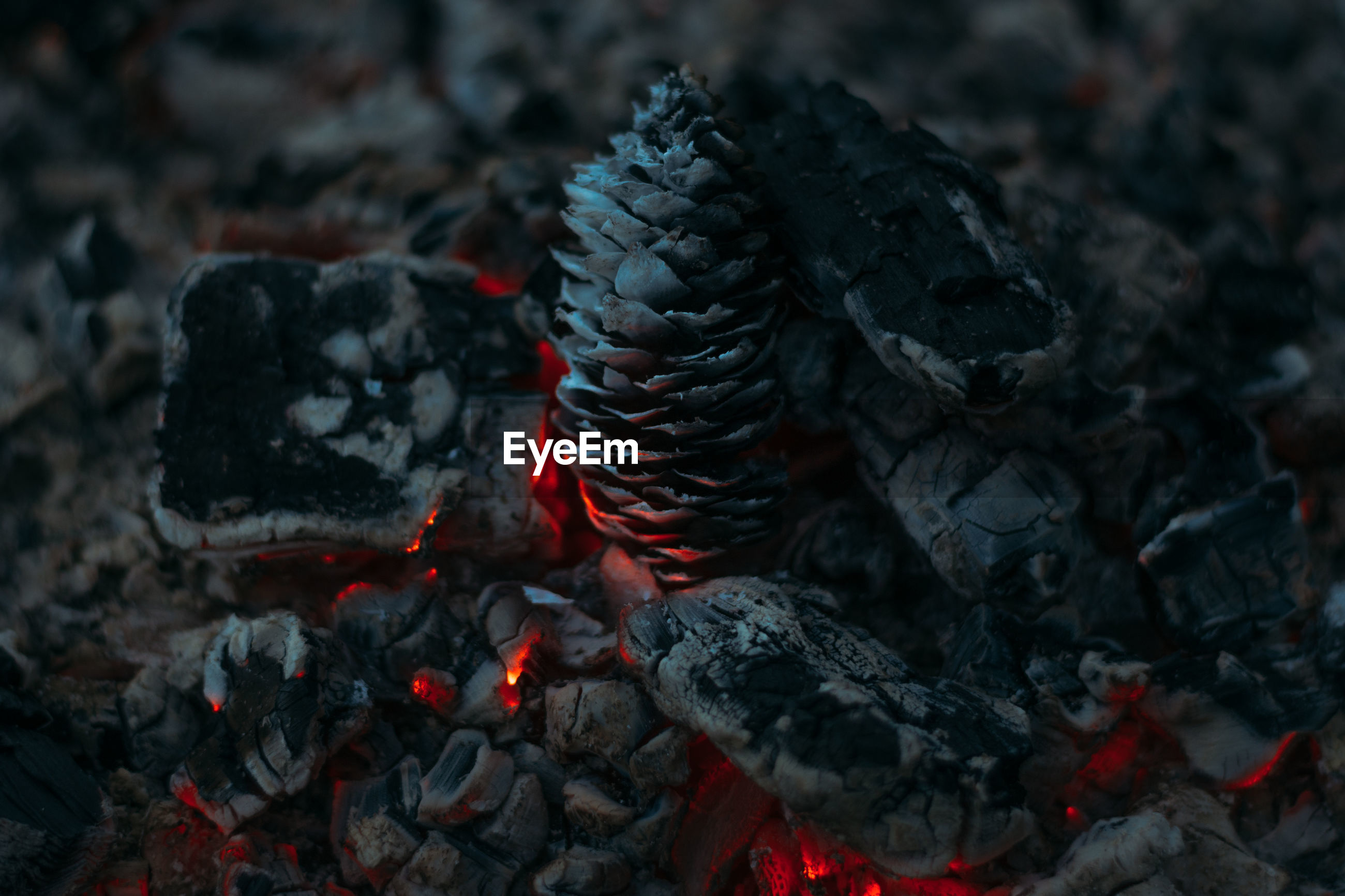 Close-up of pine cone burning with firewood