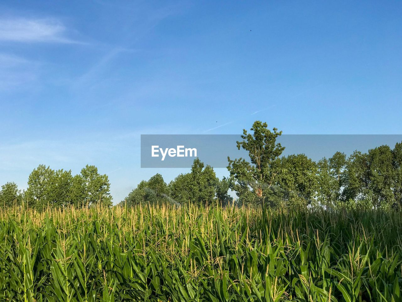 plant, growth, sky, field, landscape, land, tree, environment, tranquility, agriculture, beauty in nature, tranquil scene, rural scene, nature, crop, green color, scenics - nature, day, blue, no people, outdoors, plantation
