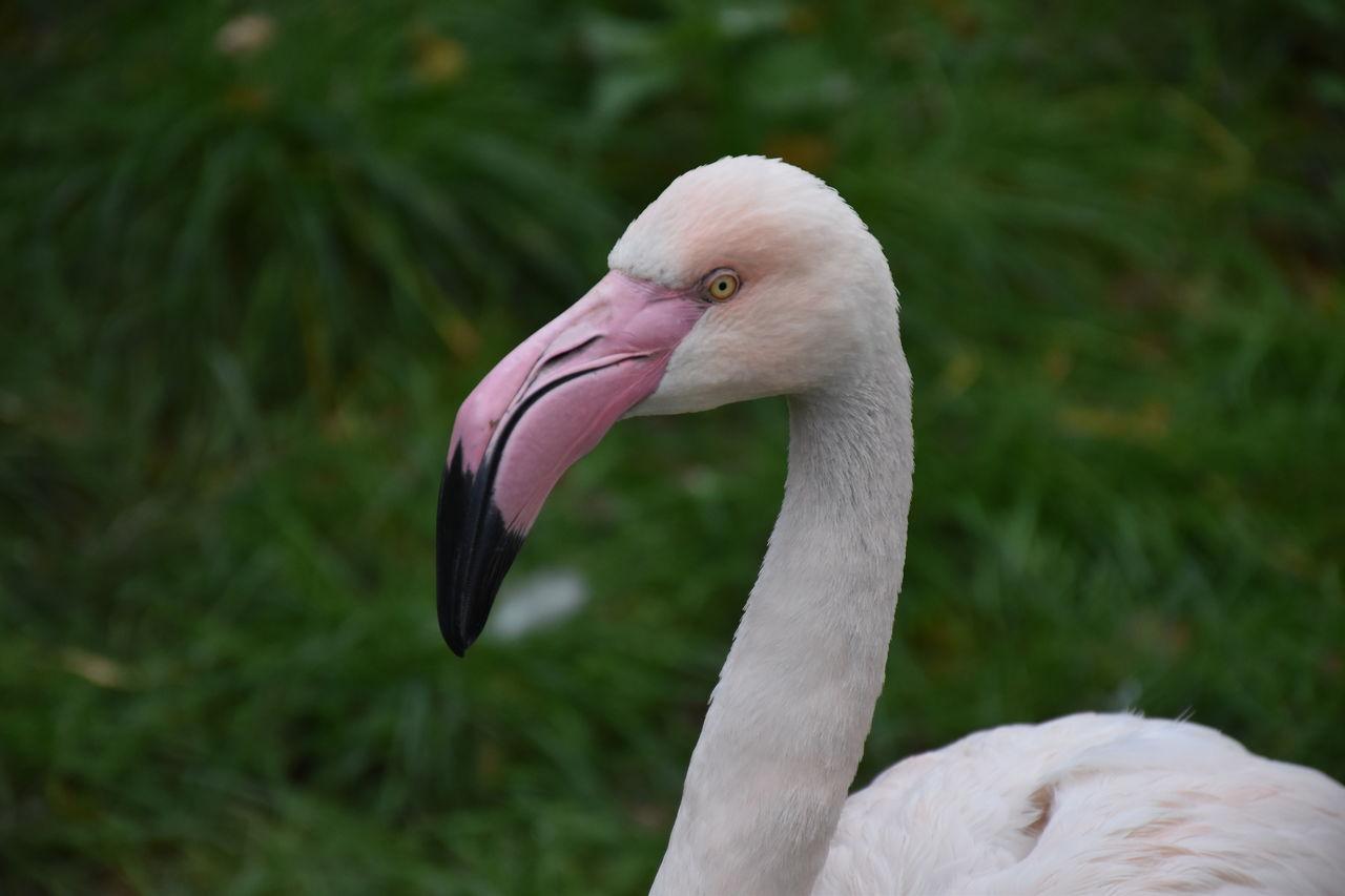 CLOSE-UP OF WHITE BIRD