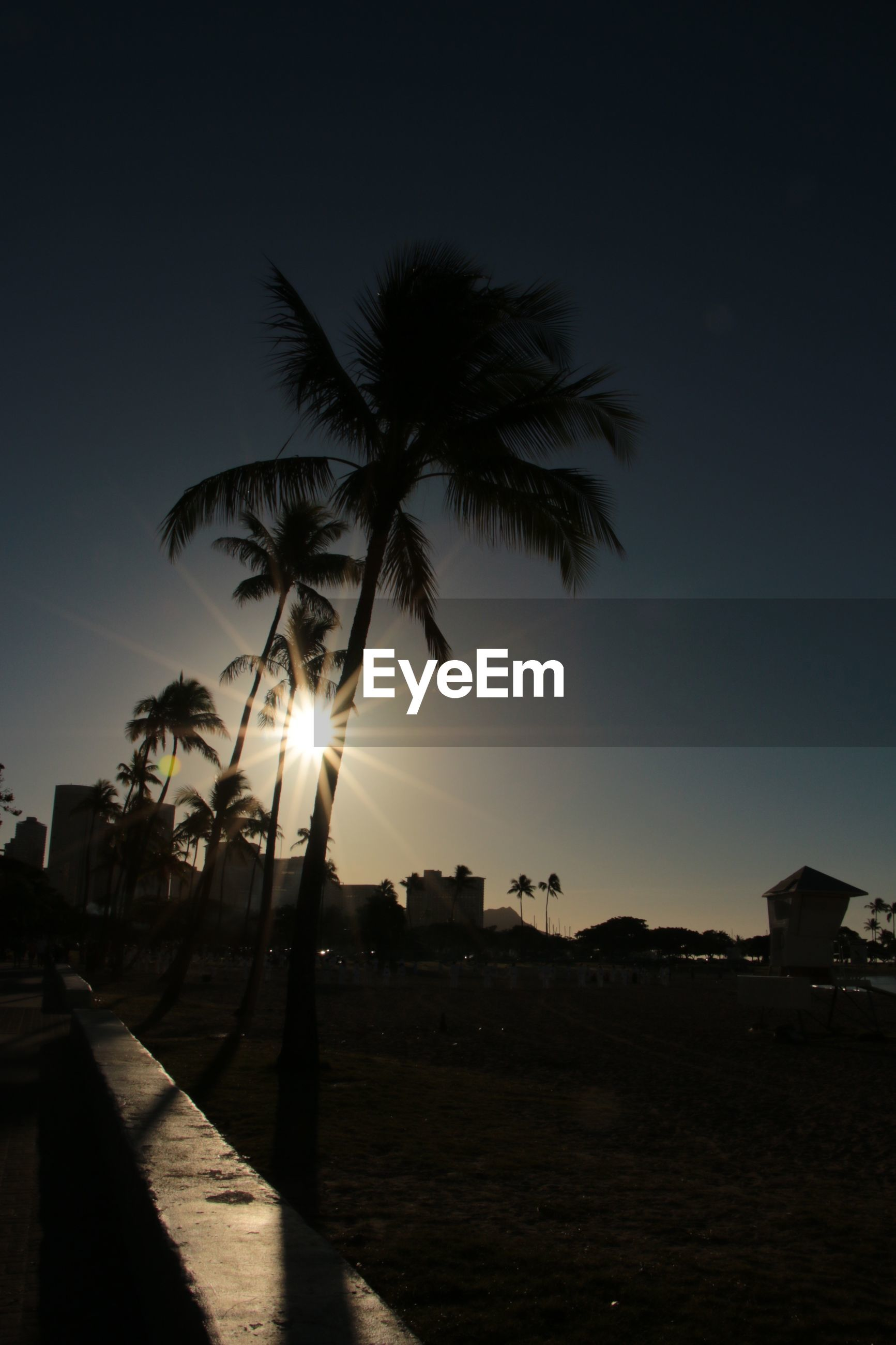 tree, palm tree, sun, building exterior, silhouette, sunset, sunlight, built structure, sky, architecture, clear sky, growth, lens flare, tranquility, nature, sunbeam, tranquil scene, city, tree trunk, street