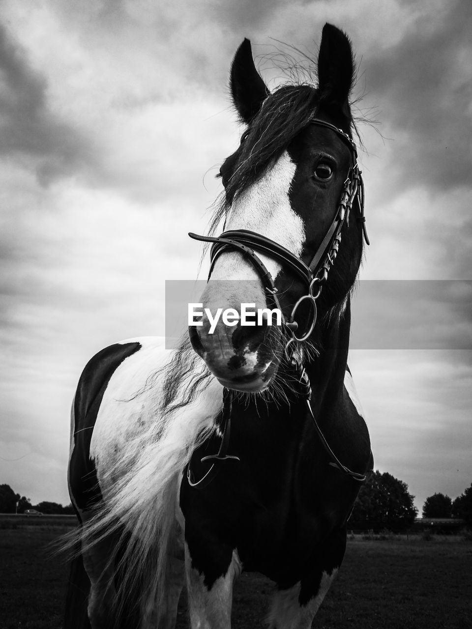 Close-Up Portrait Of Horse On Field Against Cloudy Sky