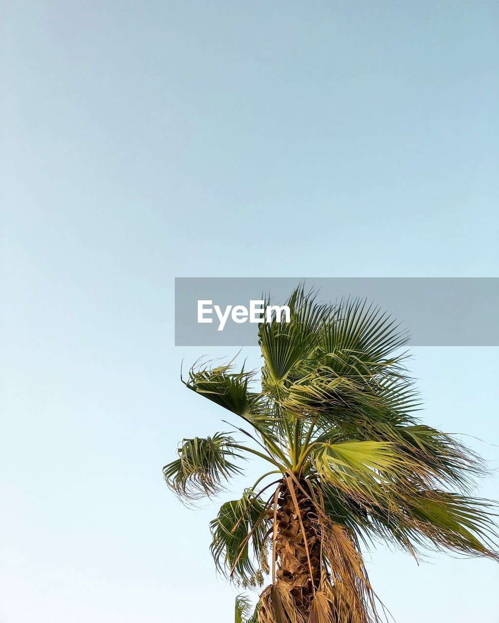 sky, growth, plant, clear sky, copy space, low angle view, nature, tree, palm tree, day, no people, beauty in nature, tropical climate, outdoors, green color, tranquility, leaf, plant part, sunlight, coconut palm tree, palm leaf, tropical tree, sepal