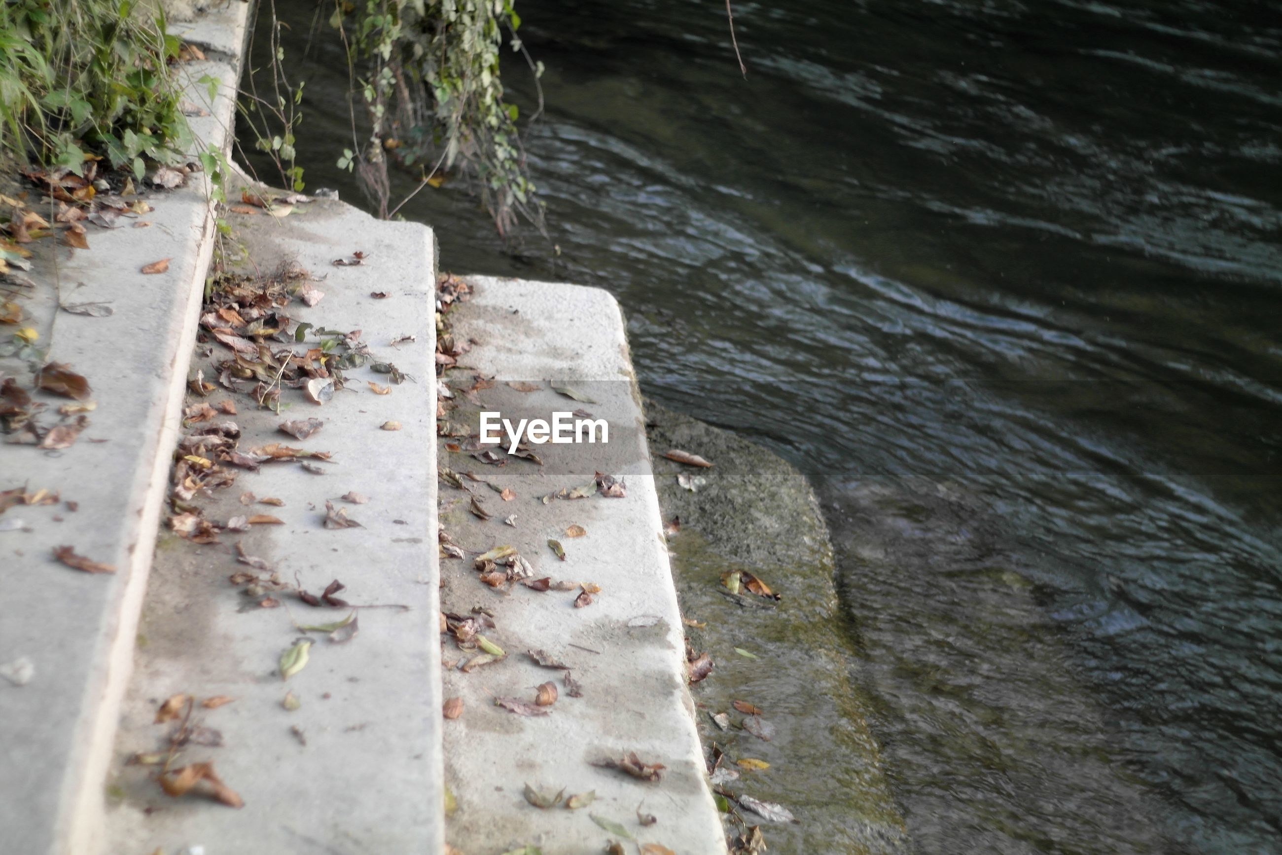 SCENIC VIEW OF RIVER BY TREE TRUNK