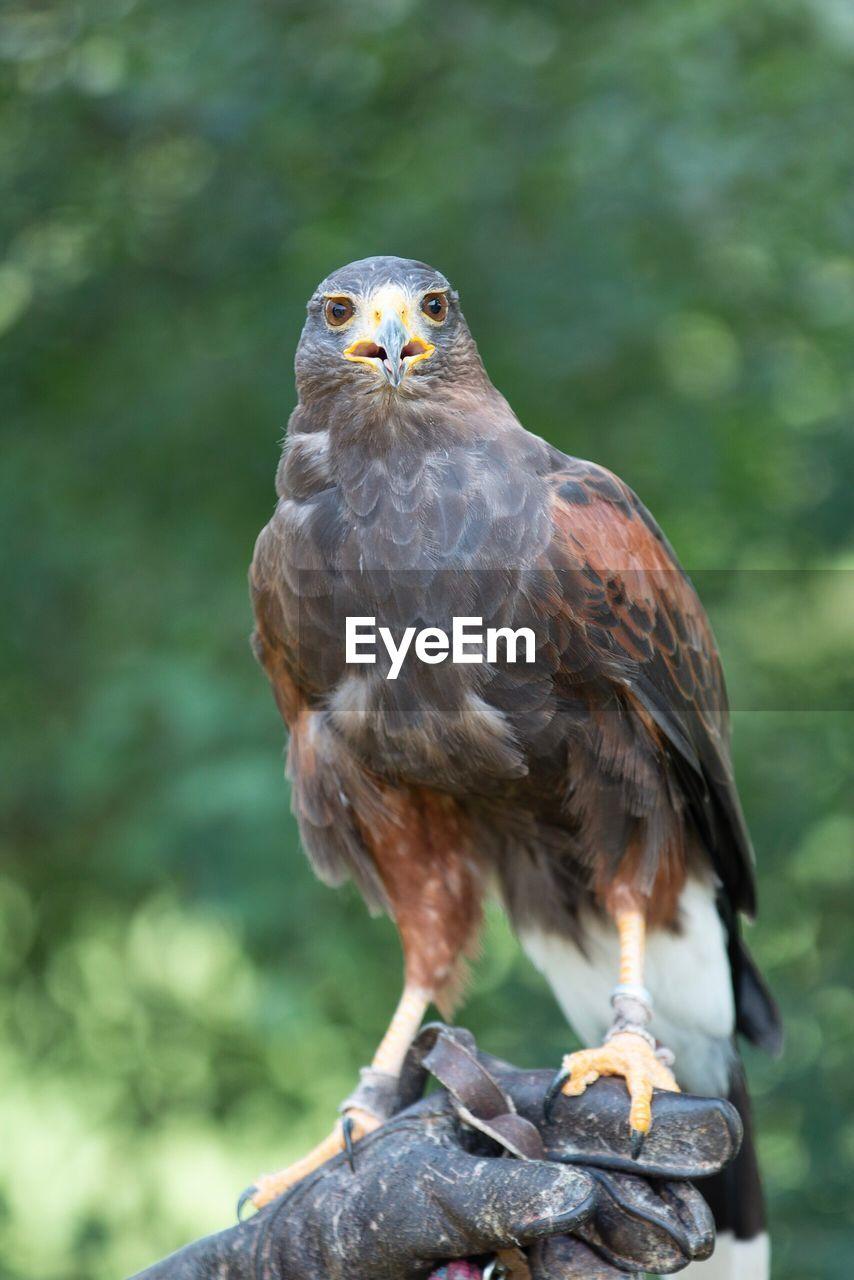 Close-Up Of Bird Perching Hand