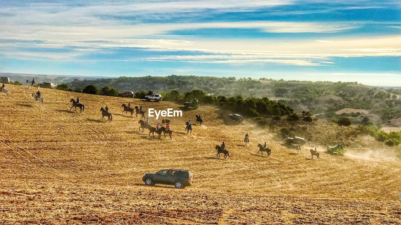 landscape, environment, land, sky, field, plant, nature, day, cloud - sky, tree, agriculture, beauty in nature, scenics - nature, livestock, rural scene, animal themes, animal, group of animals, cattle, large group of animals, outdoors, herd