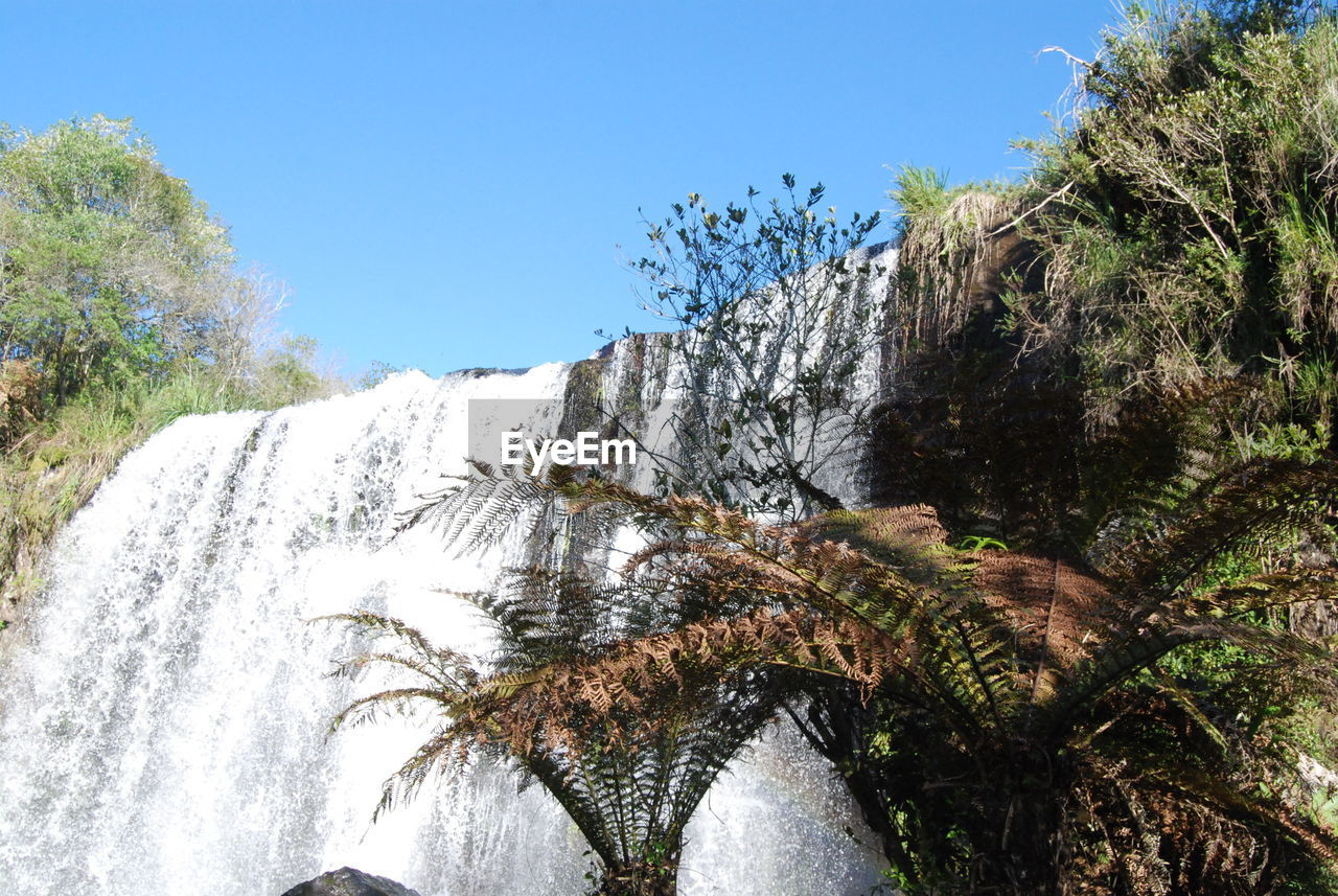 tree, waterfall, plant, sky, nature, clear sky, scenics - nature, beauty in nature, day, water, motion, no people, flowing water, growth, long exposure, outdoors, rock, environment, sunlight, flowing, falling water