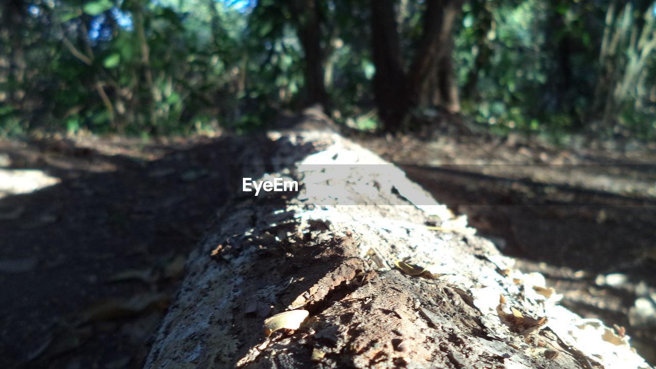 tree trunk, tree, forest, nature, day, outdoors, wood - material, rough, focus on foreground, no people, sunlight, close-up