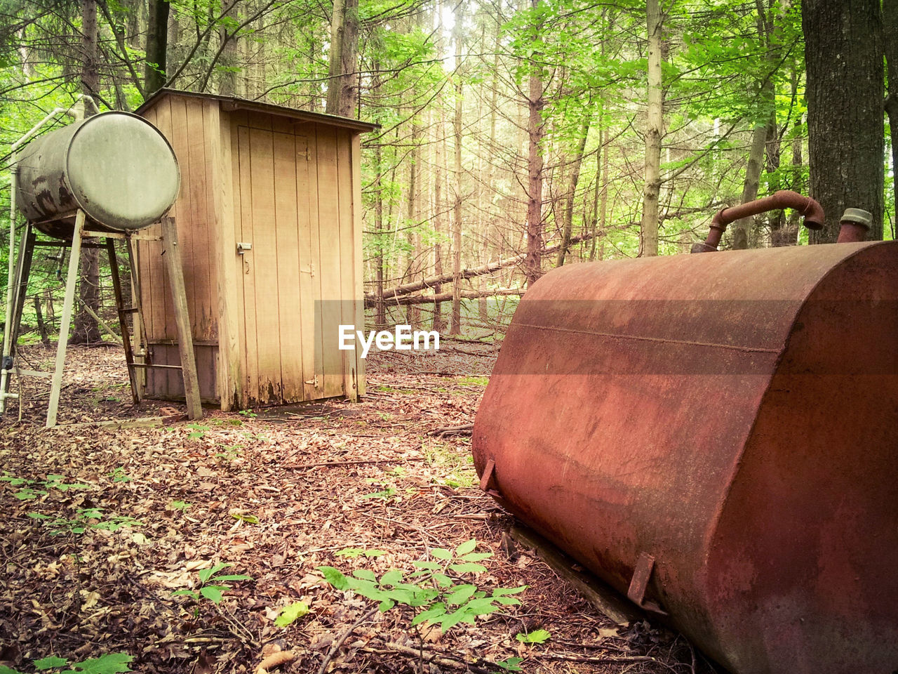 tree, day, tree trunk, barrel, forest, no people, wood - material, outdoors, wine cask, leaf, nature