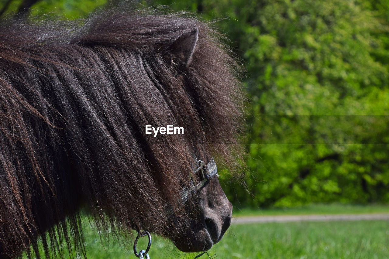 Close-Up Side View Of A Pony