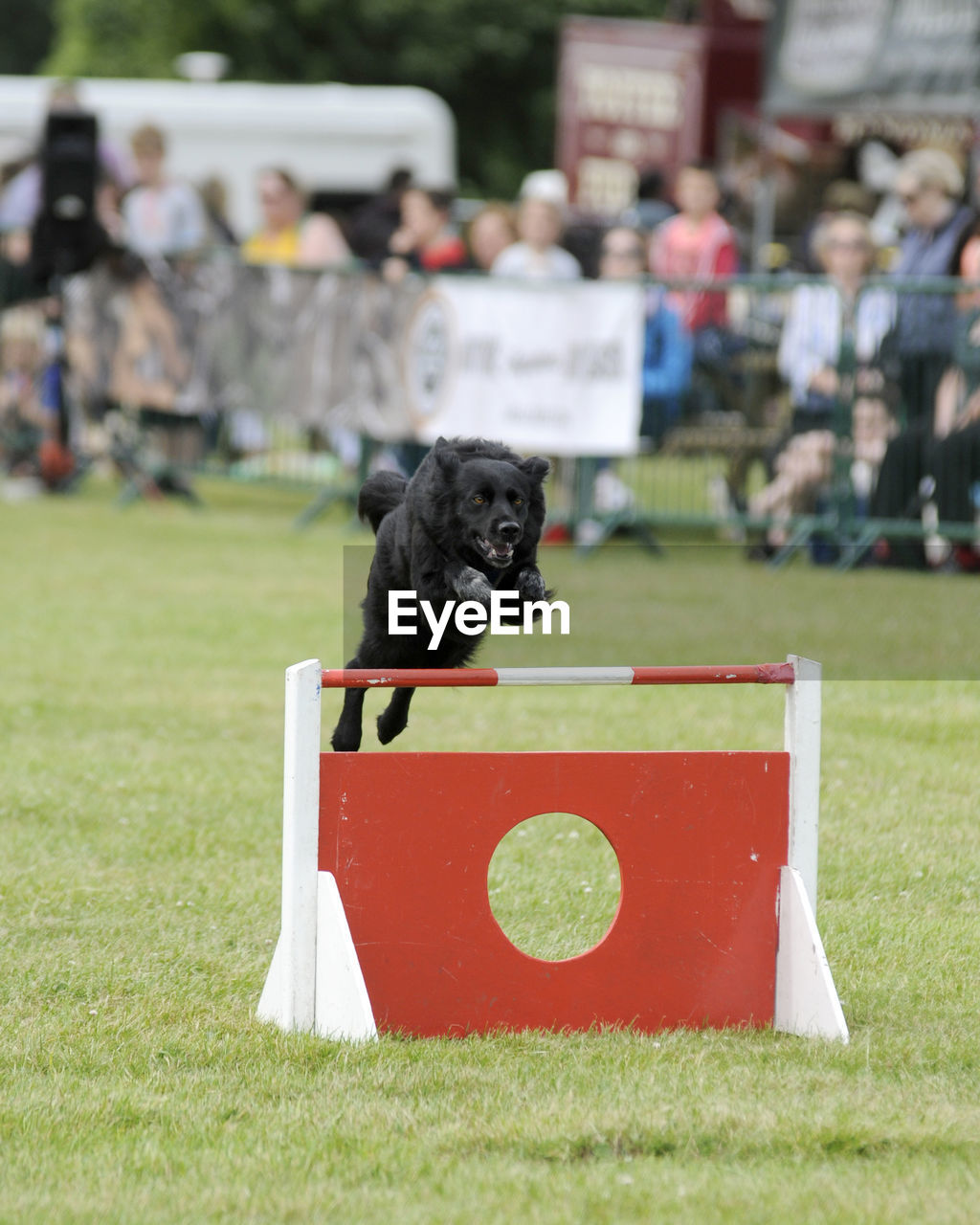 Black Dog Jumping Over Red Hurdle