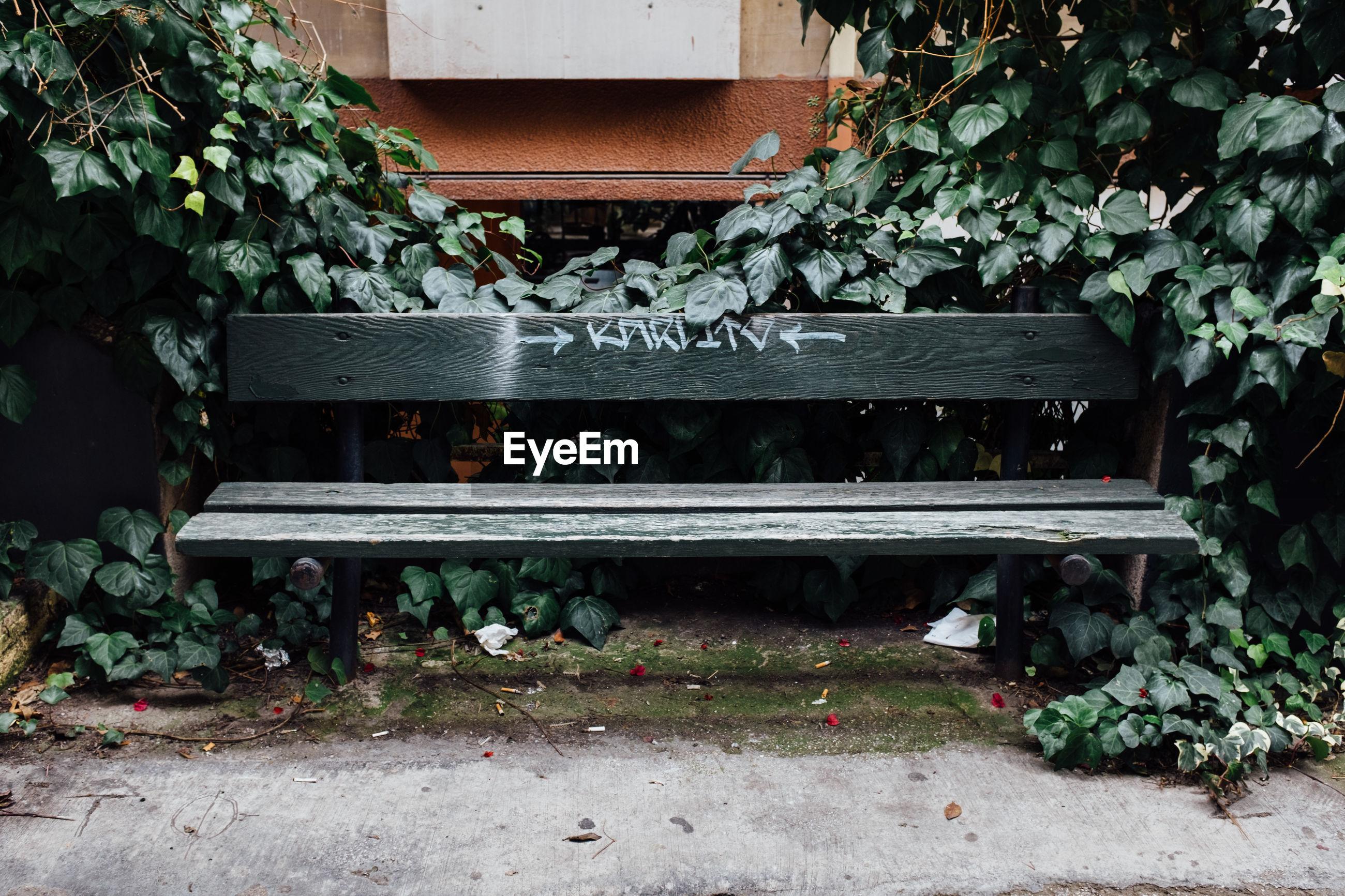 EMPTY BENCH BY PLANTS IN YARD