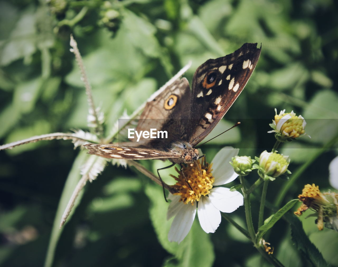 flower, animal wildlife, animal, animals in the wild, beauty in nature, insect, flowering plant, invertebrate, one animal, plant, animal themes, animal wing, butterfly - insect, close-up, nature, vulnerability, fragility, freshness, no people, growth, flower head, pollination, butterfly