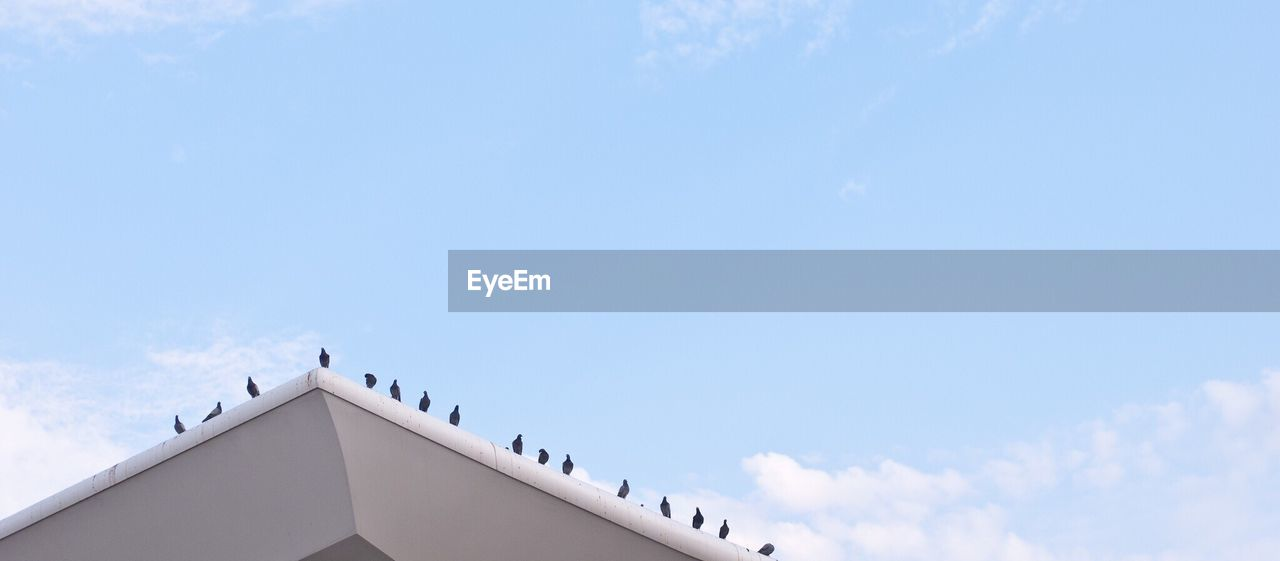 Low angle view of pigeons perching on roof against cloudy sky